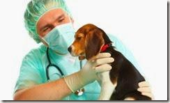 Castración canina en Villa Clelia