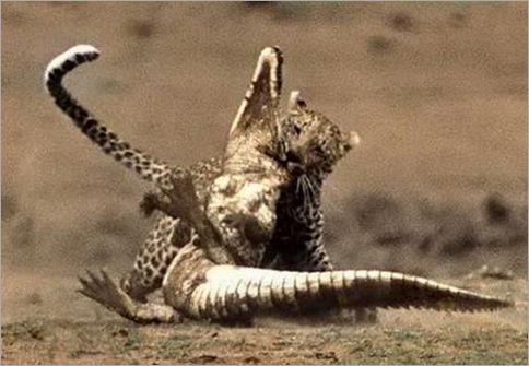 Amazing struggle survival - wild nature 04