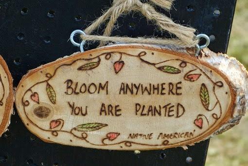 Цвети везде, где бы тебя ни посадили
