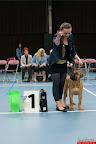 20130511-BMCN-Bullmastiff-Championship-Clubmatch-1526.jpg