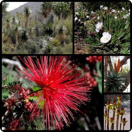 Desert Museum flowers_450