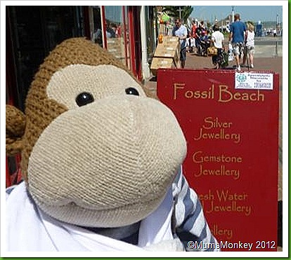 Fossil beach Shop Weymouth