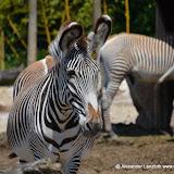 Safaripark_130527-002.JPG
