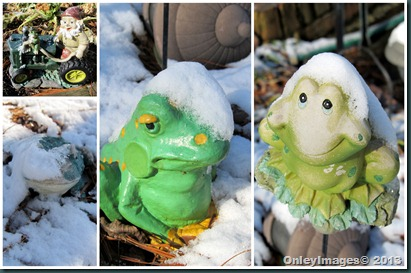 snow frogs