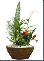 ervas-cura-proteção