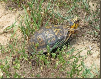 turtle at North Carolina Arboretum