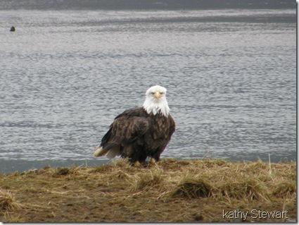 Eagle on the shore