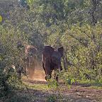 Die kleinen Elefanten kommen am Abend zurück, Sheldrick Wildlife Trust © Foto: Susanne Schlesinger | Outback Africa Erlebnisreisen