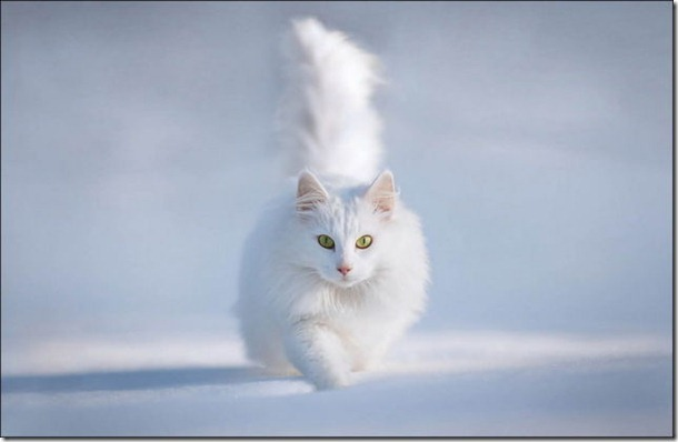 cats-play-snow-27