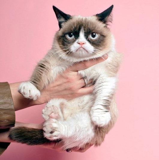 Grumpy-Tard-Cat-for-Prada-2