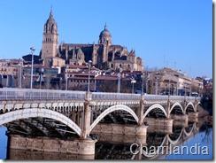 puente de Enrique Esteban 2011