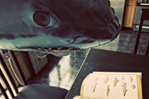 SharkLunch