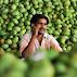 mango wholesaler Rajshahi Tour