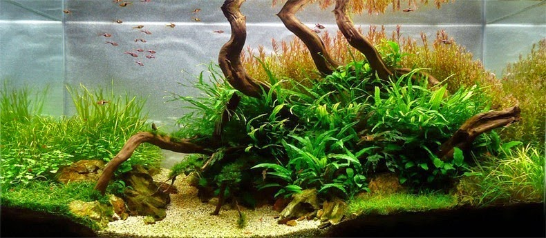 aquascaping-11