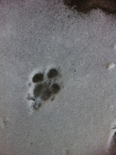 Evidence of creativity among non-humans is everywhere.  Above: The canine use of negative space and impression are among many ancient techniques still employed by canine artists today.