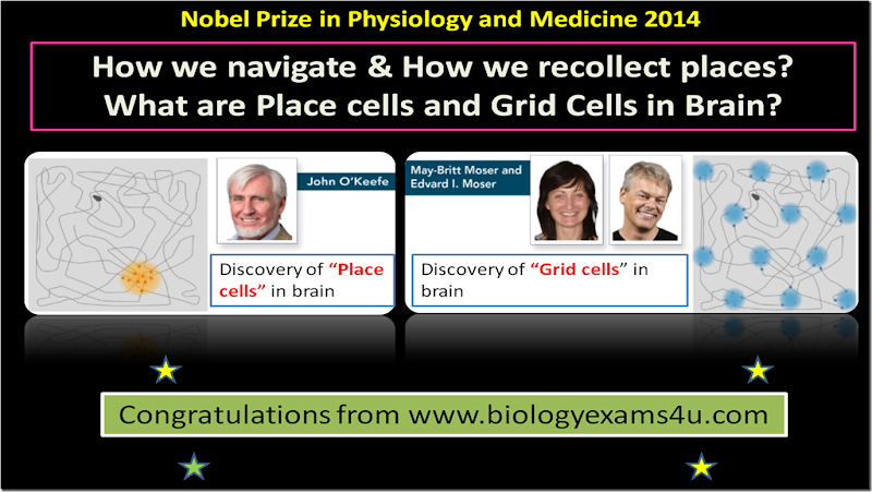Nobel prize 2014 winners in Physiology and Medicine