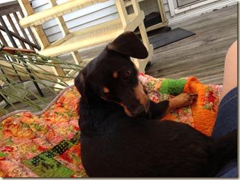 Sadie on hammock