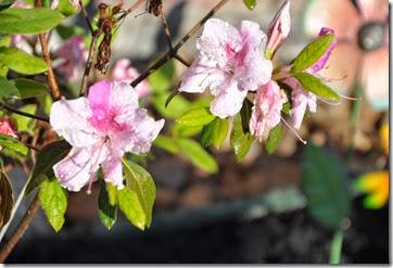Spring Flower Bed 8