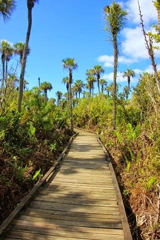 Collier Seminole Boardwalk