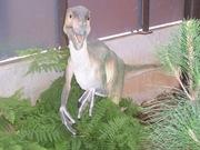 2008.09.05-010 Variraptor