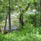 River in front of house.jpg