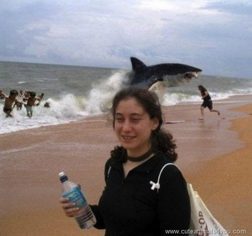 50_Funniest_Animal_Photobombs_Of_All_Time_21