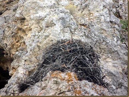 osprey nest3