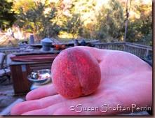 peachy perfect