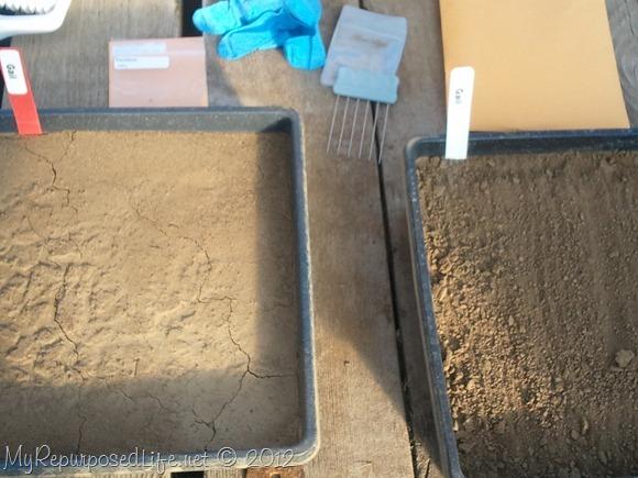 Grass Seed Experiment Nex Gen (Pennington) (5)