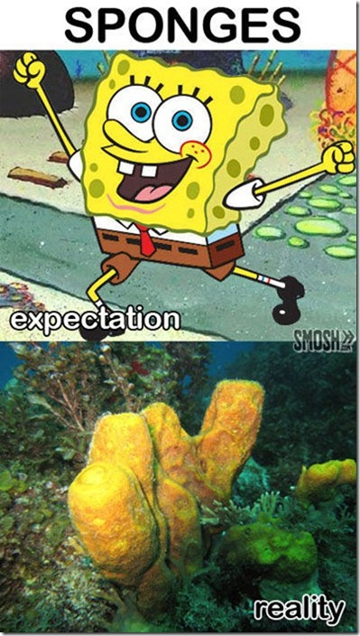 expectation-versus-reality-27