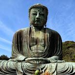 the giant Daibutsu in kamakura in Kamakura, Kanagawa, Japan