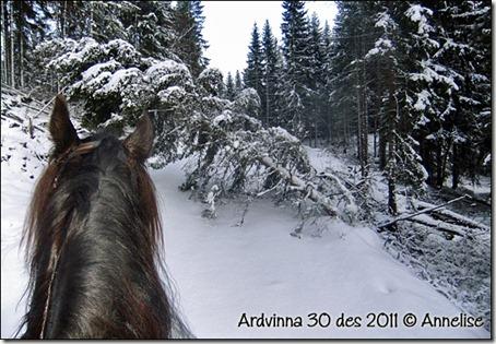ardvinna-30-12-2011_02