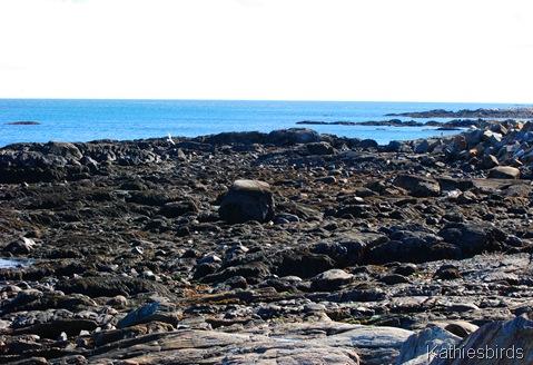 3. shore at Great Island common-kab