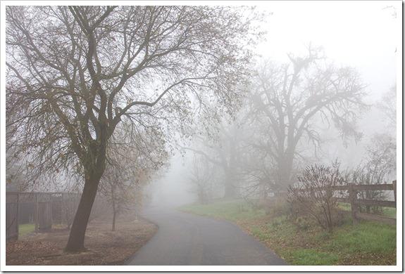 111220_fog_greenbelt1