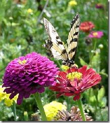 sommerfugle 1