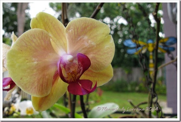 04-08-orchid