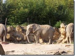 2005.05.18-029 éléphants