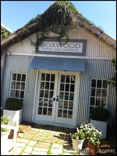 boxwoods