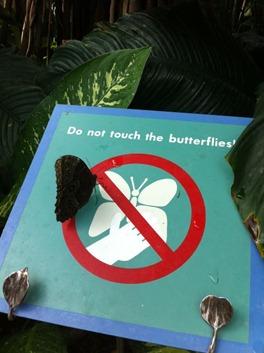 1_butterflies