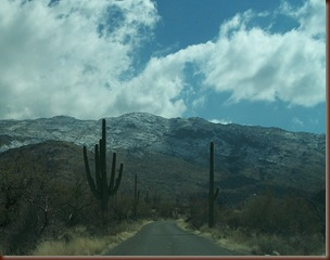 Saguaro04