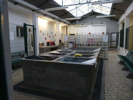 Obiective turistice Lisabona: Spalatorie din Alfama