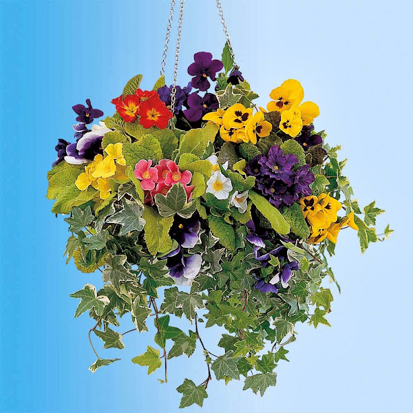 8797674864670 Hanging Flower Baskets