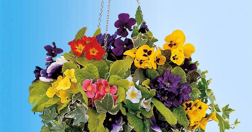 Flower Tower Hanging Baskets : Hanging flower baskets casual cottage