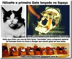 gata-espaco13