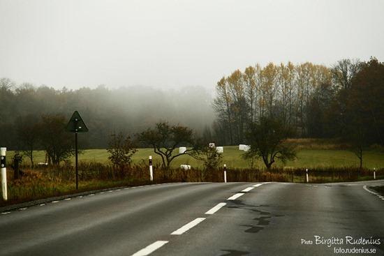 boras_20111029_dimma