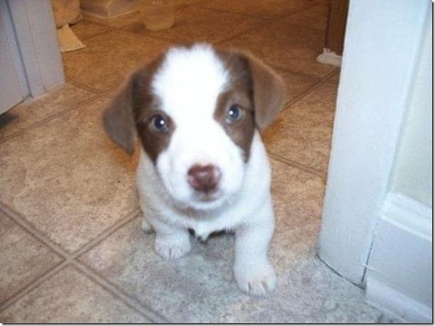 cute-puppies-awww-27