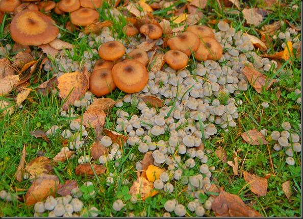 koivunkanto sieniä 016