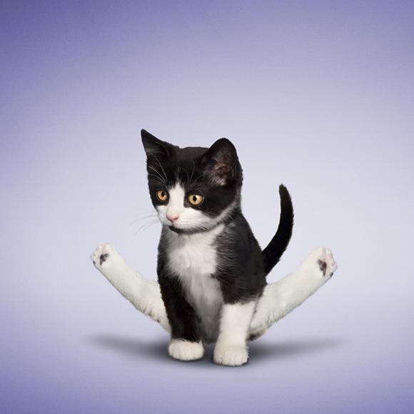 Da_Borris_kitten_3.png