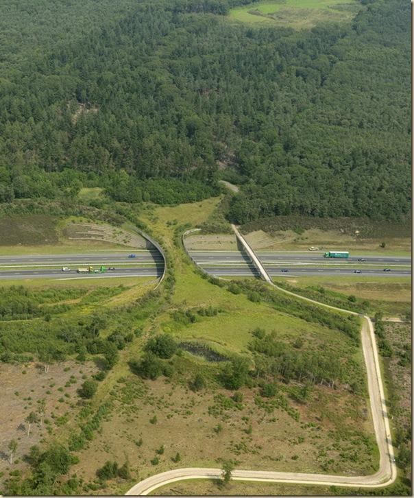 Ponts pour animaux - passages à faune (3)
