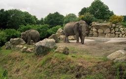 2002.06.10-153.06 éléphants